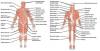 Notre musculature